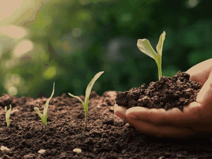 هوموس در خاک
